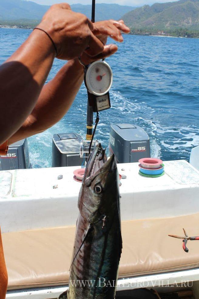 морская рыбалка на бали